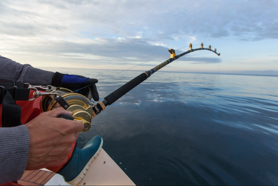 What You Need to Know About Fishing Rods